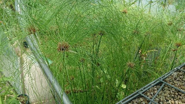 f:id:tosshii-plants:20180710092850j:image