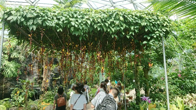 f:id:tosshii-plants:20180714144240j:image