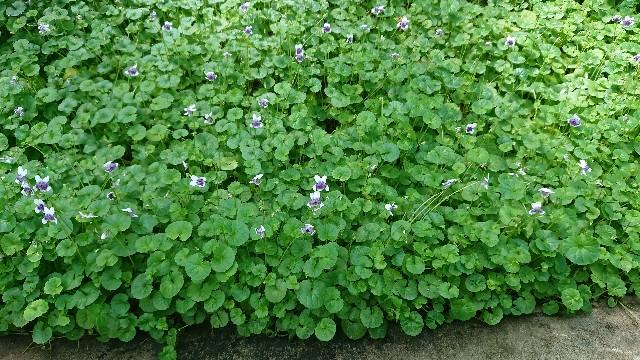 f:id:tosshii-plants:20180718205319j:image