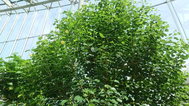 f:id:tosshii-plants:20180719205426j:image