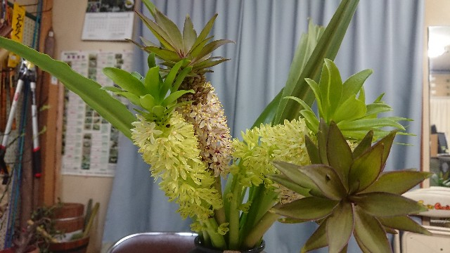 f:id:tosshii-plants:20180725214507j:image