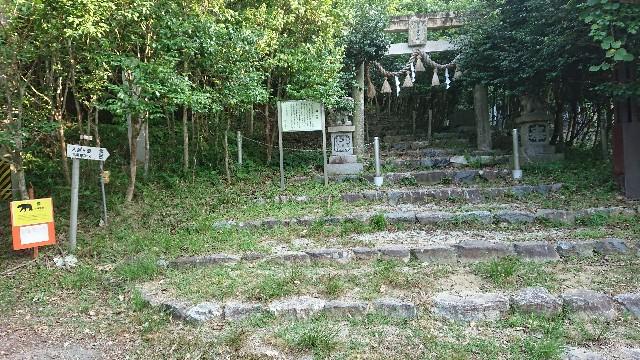 f:id:tosshii-plants:20180727215918j:image