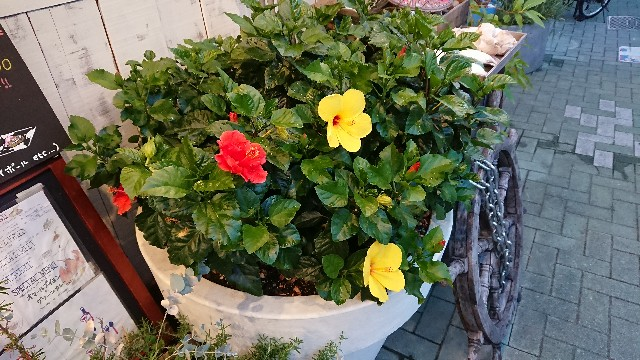 f:id:tosshii-plants:20180818222152j:image
