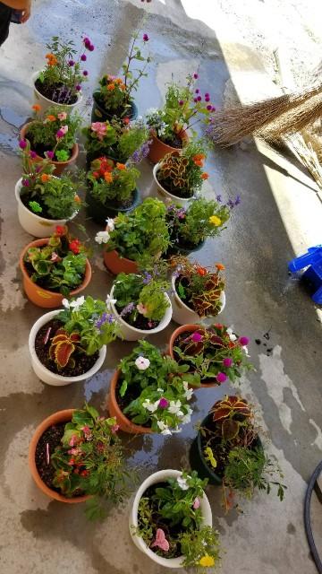 f:id:tosshii-plants:20180823175241j:image
