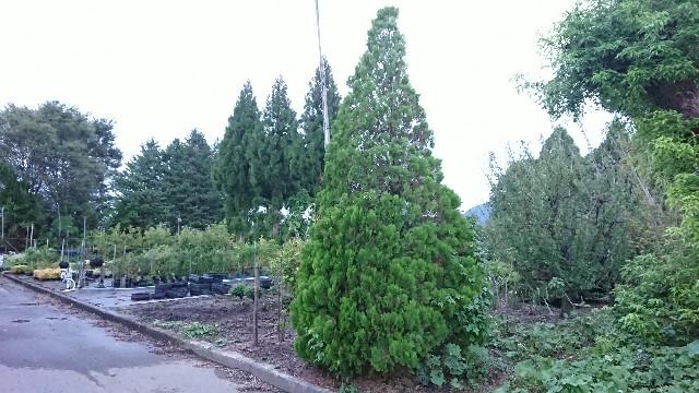 f:id:tosshii-plants:20180912215148j:image