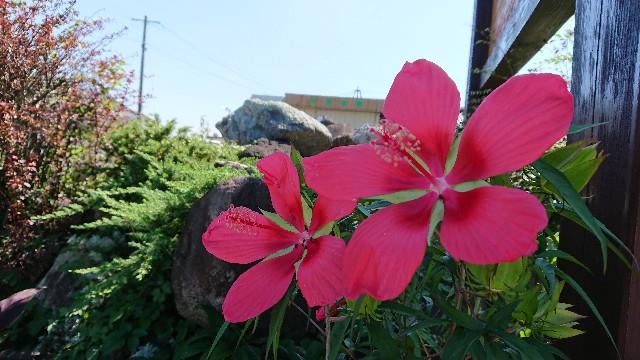 f:id:tosshii-plants:20180919212408j:image