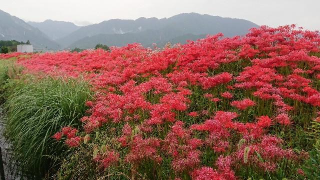 f:id:tosshii-plants:20180925221346j:image