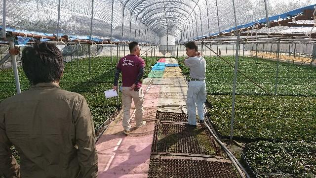 f:id:tosshii-plants:20180926230609j:image