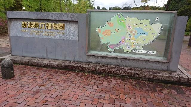 f:id:tosshii-plants:20180927214811j:image