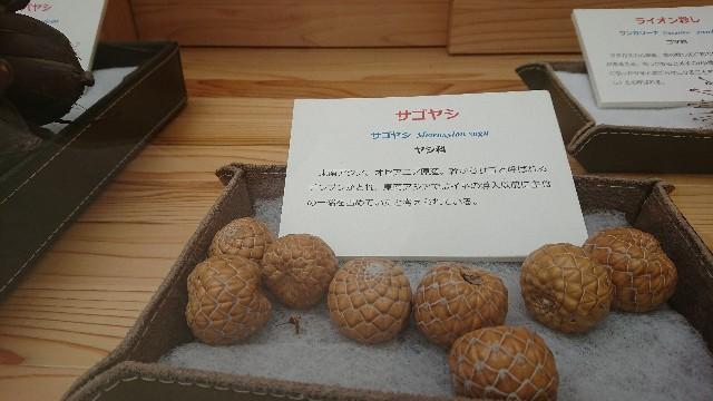 f:id:tosshii-plants:20181003195954j:image