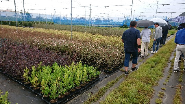 f:id:tosshii-plants:20181004235411j:image