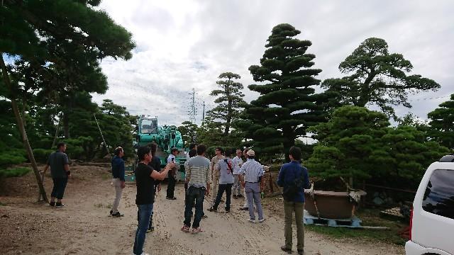 f:id:tosshii-plants:20181005190802j:image