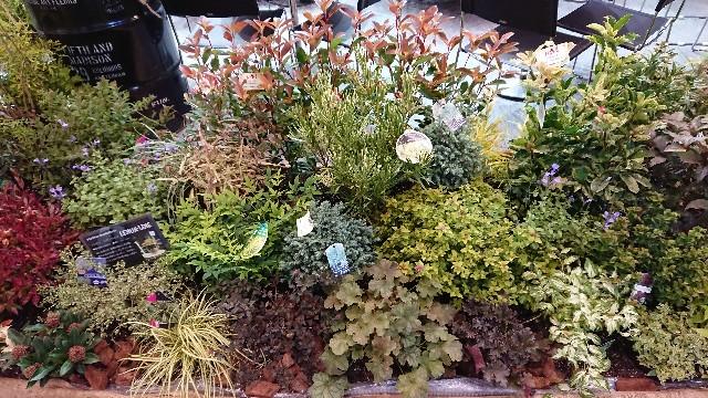 f:id:tosshii-plants:20181012204357j:image