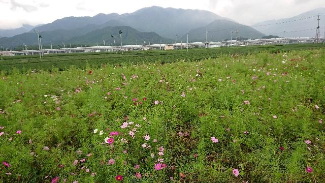 f:id:tosshii-plants:20181016211522j:image