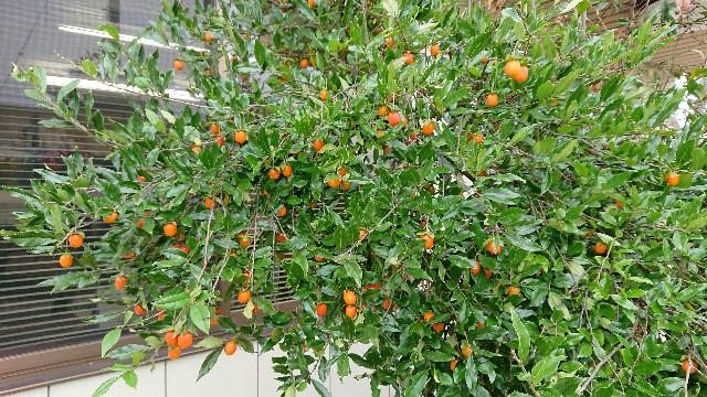 f:id:tosshii-plants:20181017221142j:image