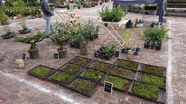 f:id:tosshii-plants:20181020214931j:image