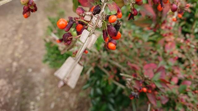 f:id:tosshii-plants:20181022221622j:image