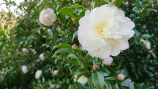 f:id:tosshii-plants:20181024194645j:image