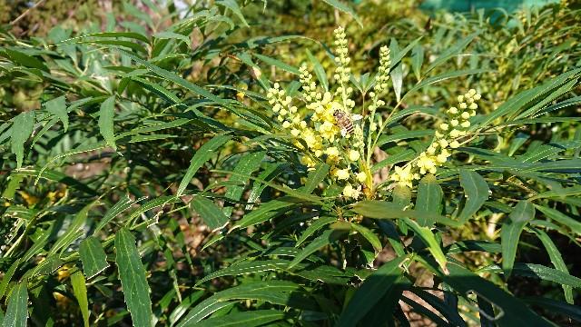 f:id:tosshii-plants:20181109155053j:image
