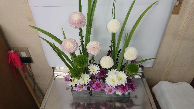 f:id:tosshii-plants:20181116211243j:image