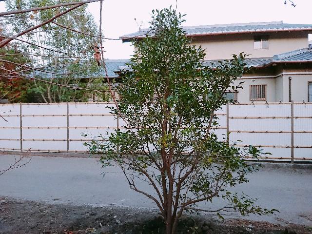 f:id:tosshii-plants:20181117182110j:image
