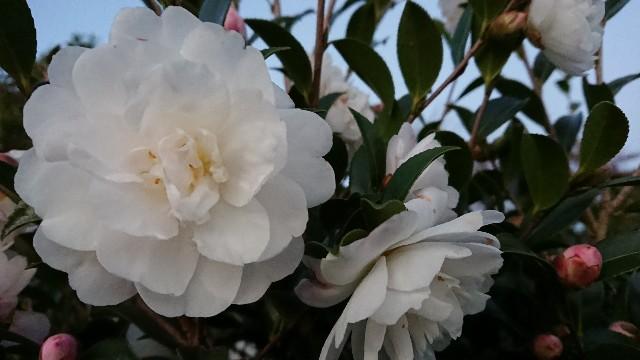 f:id:tosshii-plants:20181117233107j:image