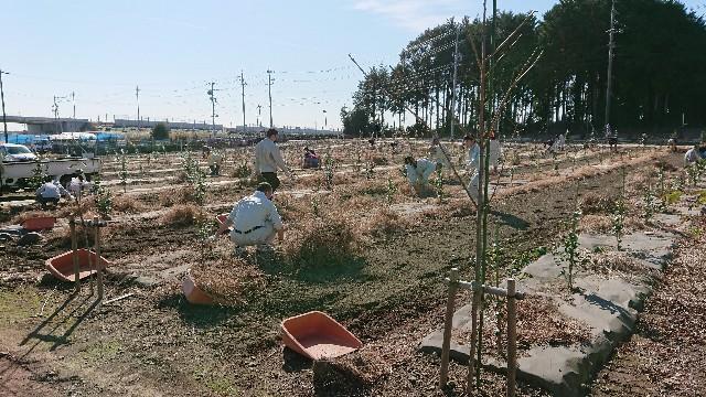 f:id:tosshii-plants:20181118211950j:image