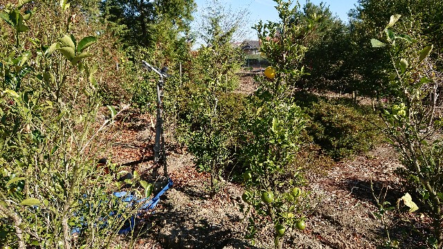 f:id:tosshii-plants:20181127231611j:image