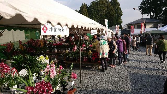 f:id:tosshii-plants:20181201214018j:image