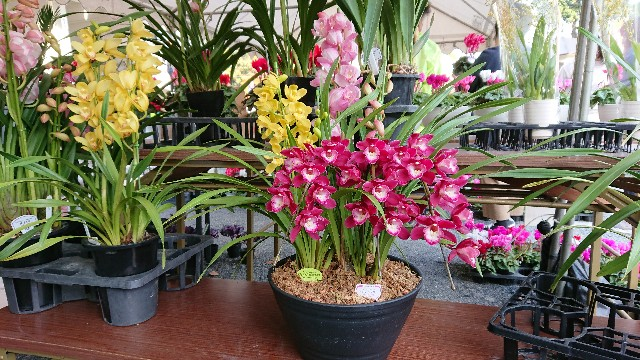 f:id:tosshii-plants:20181201214053j:image