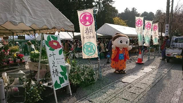 f:id:tosshii-plants:20181201214318j:image