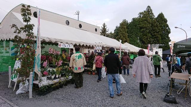 f:id:tosshii-plants:20181202185332j:image