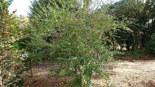 f:id:tosshii-plants:20181204101922j:image
