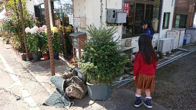 f:id:tosshii-plants:20181207203257j:image