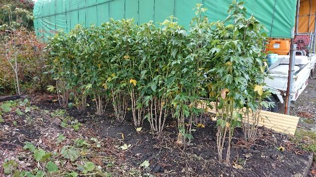 f:id:tosshii-plants:20181213113212j:image