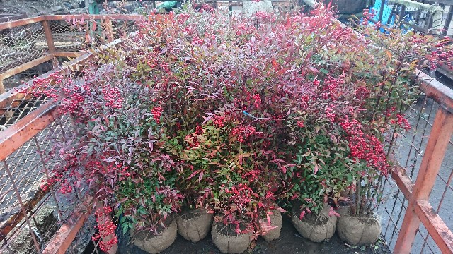 f:id:tosshii-plants:20181218210847j:image