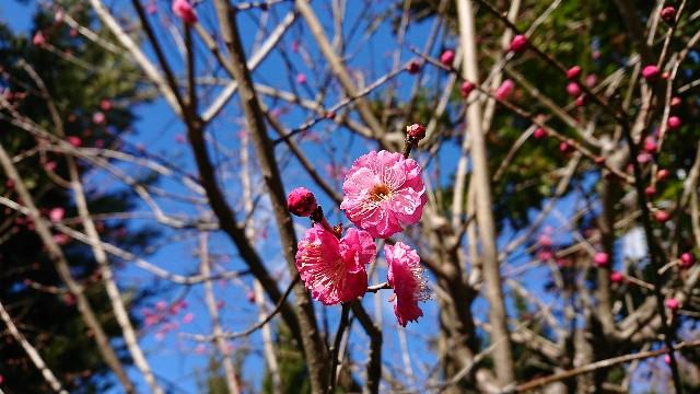f:id:tosshii-plants:20190119214537j:image