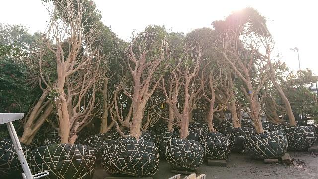 f:id:tosshii-plants:20190211121426j:image