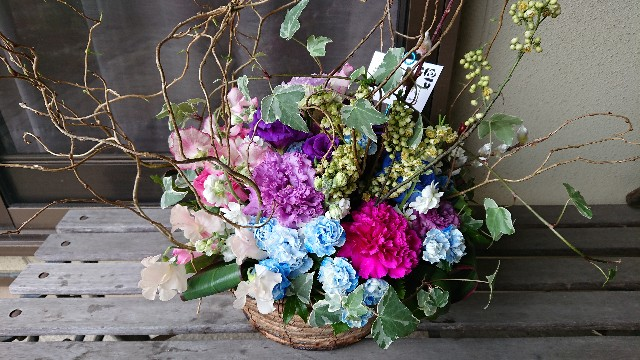f:id:tosshii-plants:20190213221940j:image