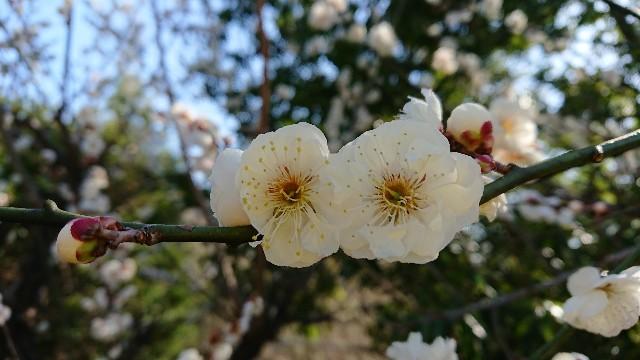 f:id:tosshii-plants:20190226164815j:image