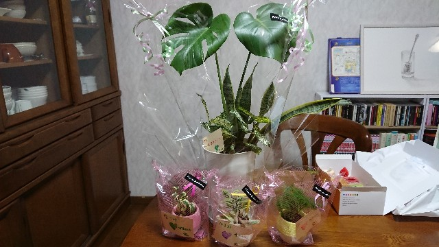 f:id:tosshii-plants:20190314224548j:image