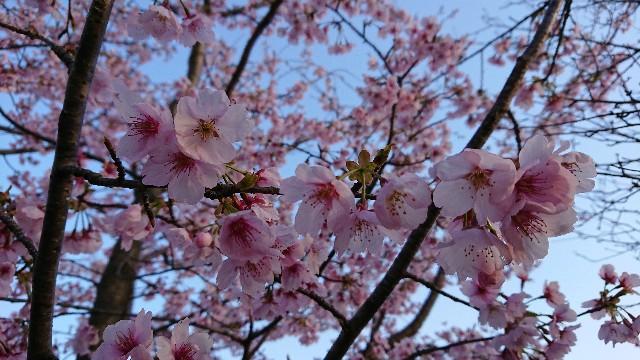 f:id:tosshii-plants:20190323191723j:image