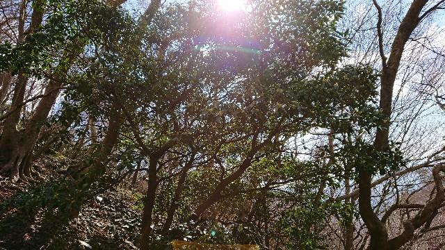 f:id:tosshii-plants:20190324221328j:image