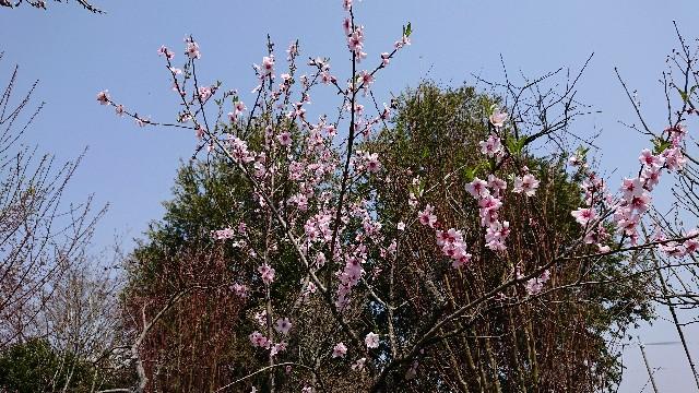 f:id:tosshii-plants:20190407193318j:image