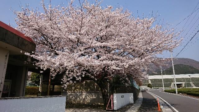 f:id:tosshii-plants:20190407223834j:image