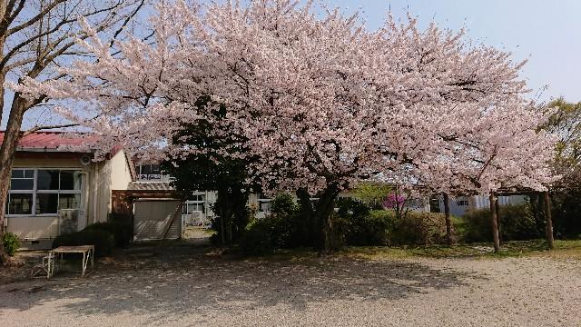 f:id:tosshii-plants:20190407223854j:image