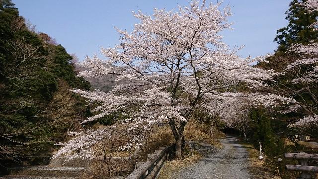 f:id:tosshii-plants:20190407223942j:image