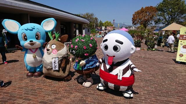 f:id:tosshii-plants:20190420233122j:image