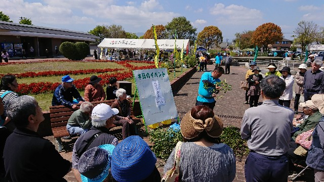 f:id:tosshii-plants:20190420233138j:image