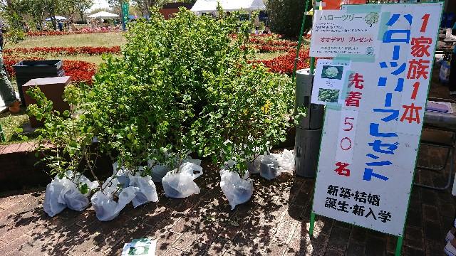f:id:tosshii-plants:20190420233342j:image